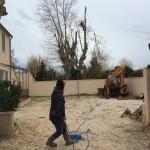 Élagage de platanes belmon paysagiste jardinier var 83