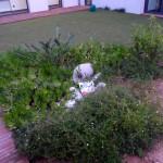 aménagement jardin intérieur patio Belmon paysagiste Six-Fours 83